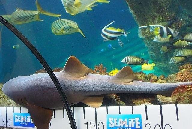 Aquarium in München mit Kindern_copyr. Sealife (2)