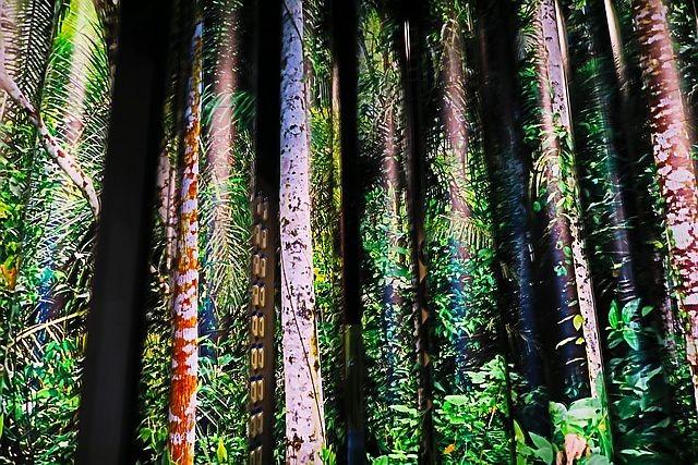 Regenwaldausstellung
