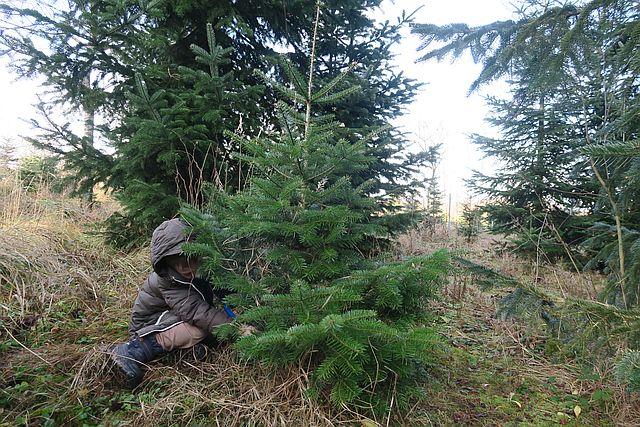 Weihnachtsbaum selber schlagen nahe munchen