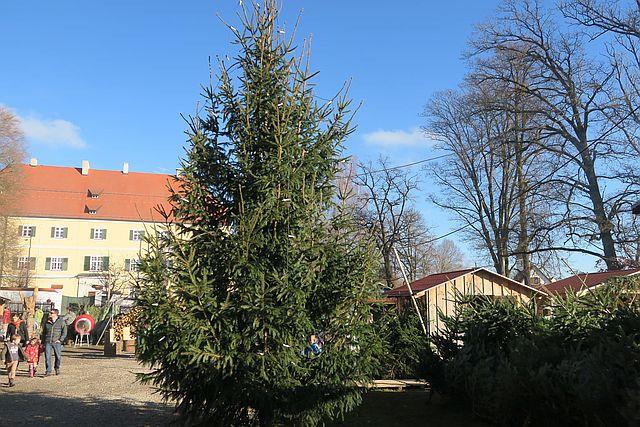 Christbaumschlagen München Tannenbaum schlagen Tannenhöfe (8)