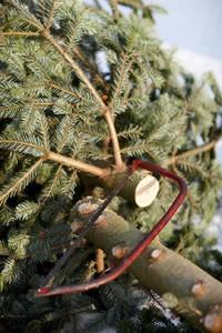 Weihnachtsbaum faellen