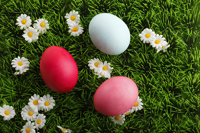 Colored easter eggs with little daisy flowers in grass