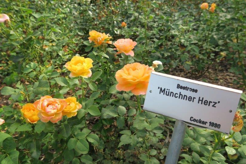 Rosengarten München mit Kindern (8)