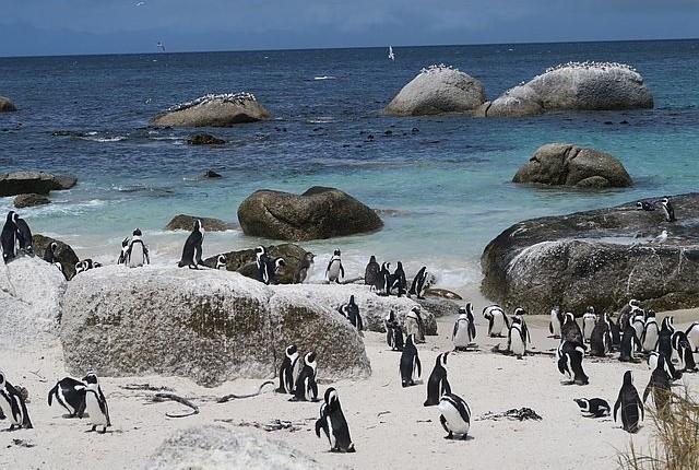 Familienurlaub Südafrika - Safari mit Kindern - Pinguine Boulders Bay mit Kindern