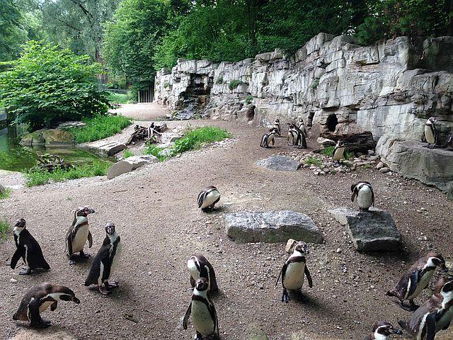 Nikolaus im Tierpark Helllabrunn