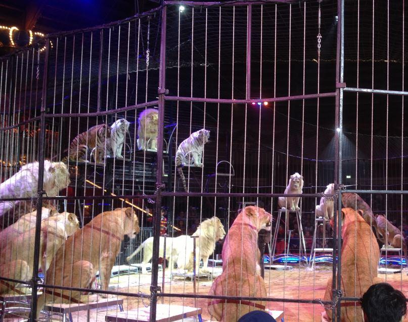 Circus Krone mit Babys und Kindern