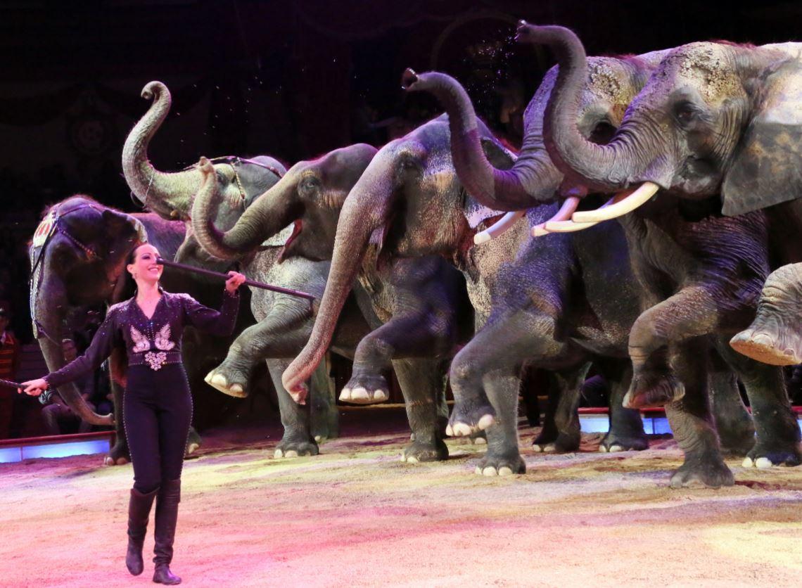 Circus Krone mit Kind